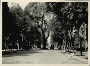 Tree-lined Street Rare Original Photograph Alhambra, CA
